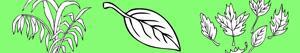 Omalovánky Rostliny a Listy